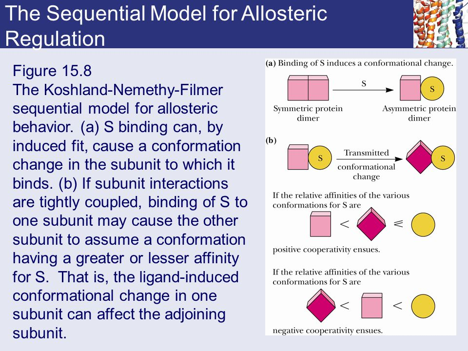 The Sequential Model for Allosteric Regulation