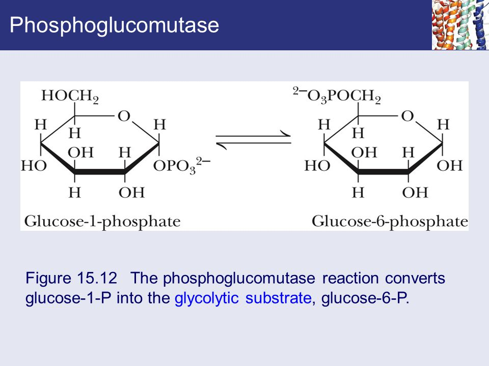 Phosphoglucomutase Figure 15.12 The phosphoglucomutase reaction converts.