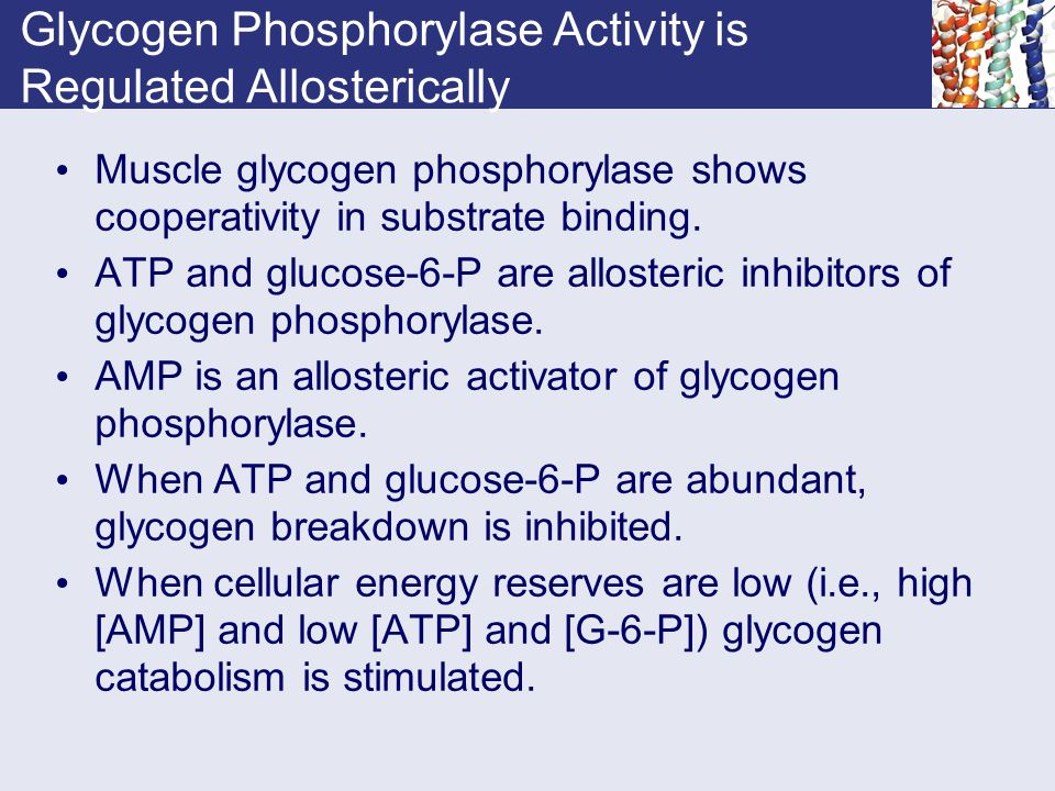 Glycogen Phosphorylase Activity is Regulated Allosterically