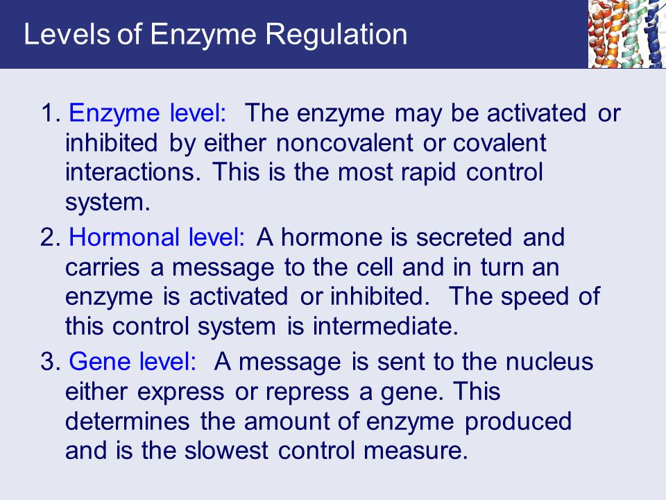 Levels of Enzyme Regulation