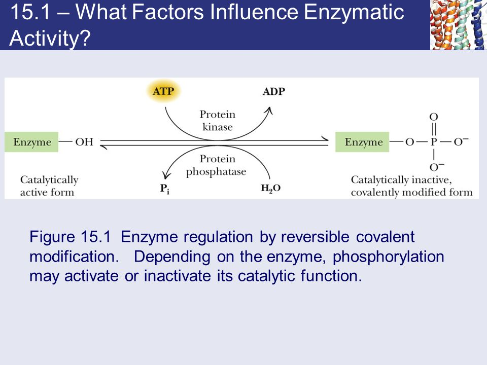 15.1 – What Factors Influence Enzymatic Activity