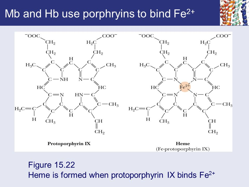 Mb and Hb use porphryins to bind Fe2+