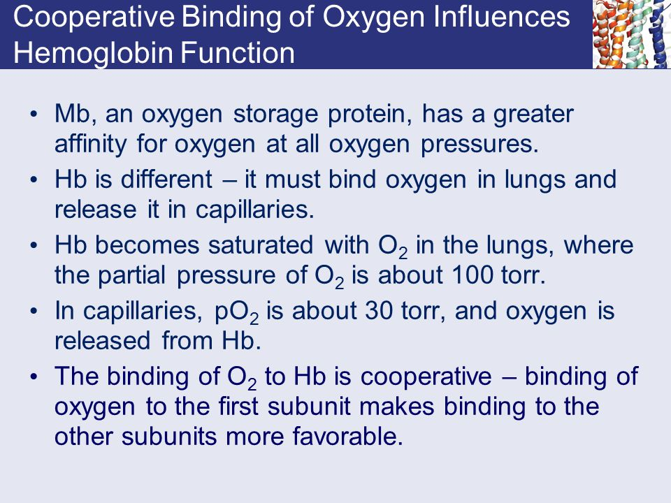 Cooperative Binding of Oxygen Influences Hemoglobin Function