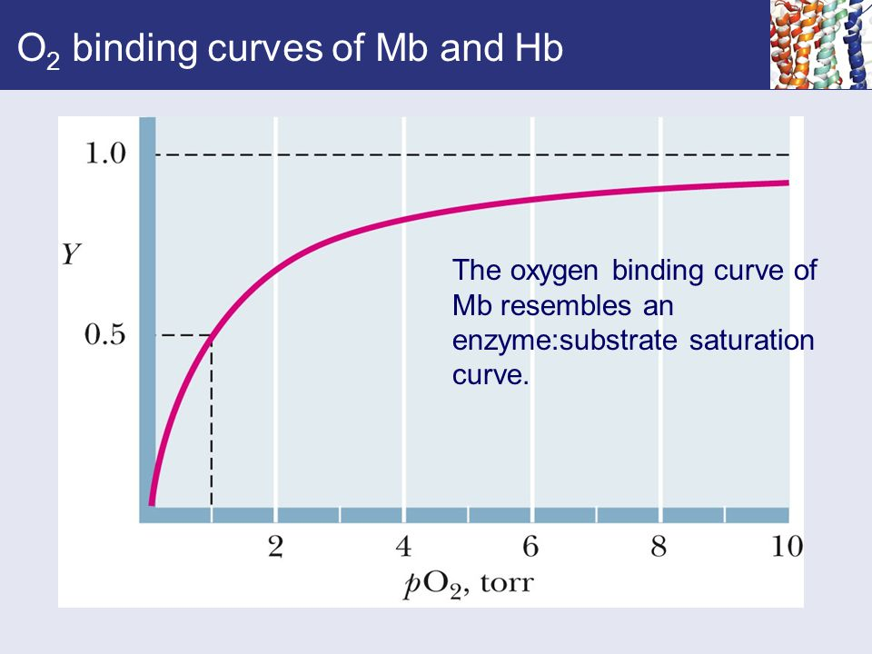 O2 binding curves of Mb and Hb