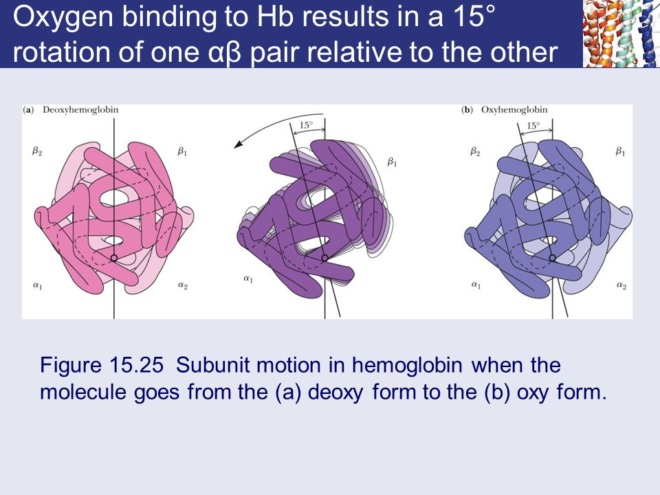 Oxygen binding to Hb results in a 15° rotation of one αβ pair relative to the other