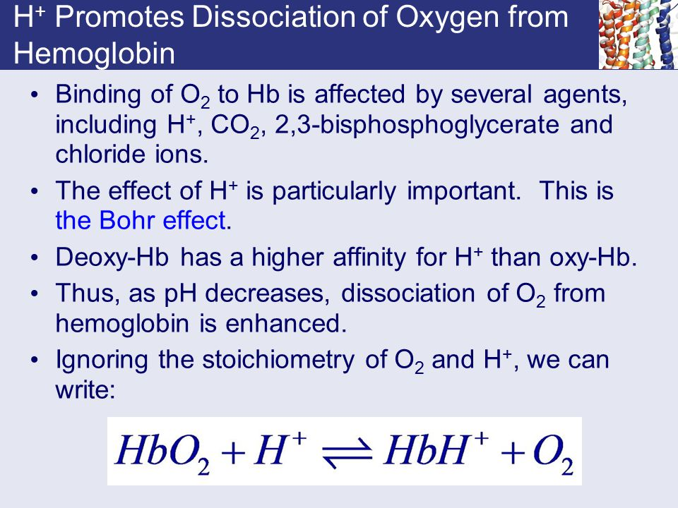 H+ Promotes Dissociation of Oxygen from Hemoglobin