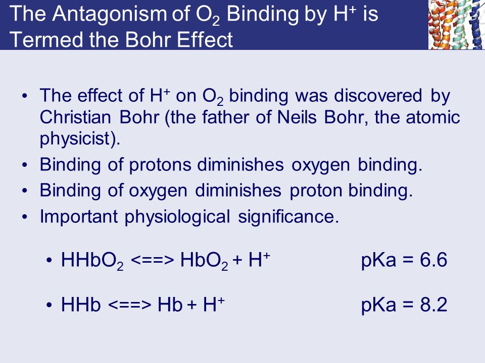 The Antagonism of O2 Binding by H+ is Termed the Bohr Effect