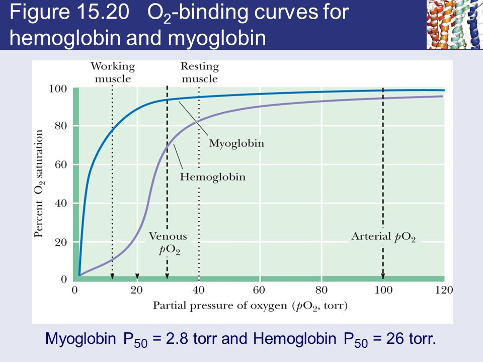 Figure 15.20 O2-binding curves for hemoglobin and myoglobin