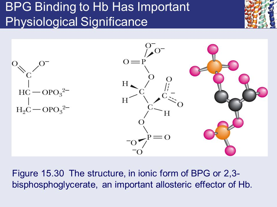 BPG Binding to Hb Has Important Physiological Significance