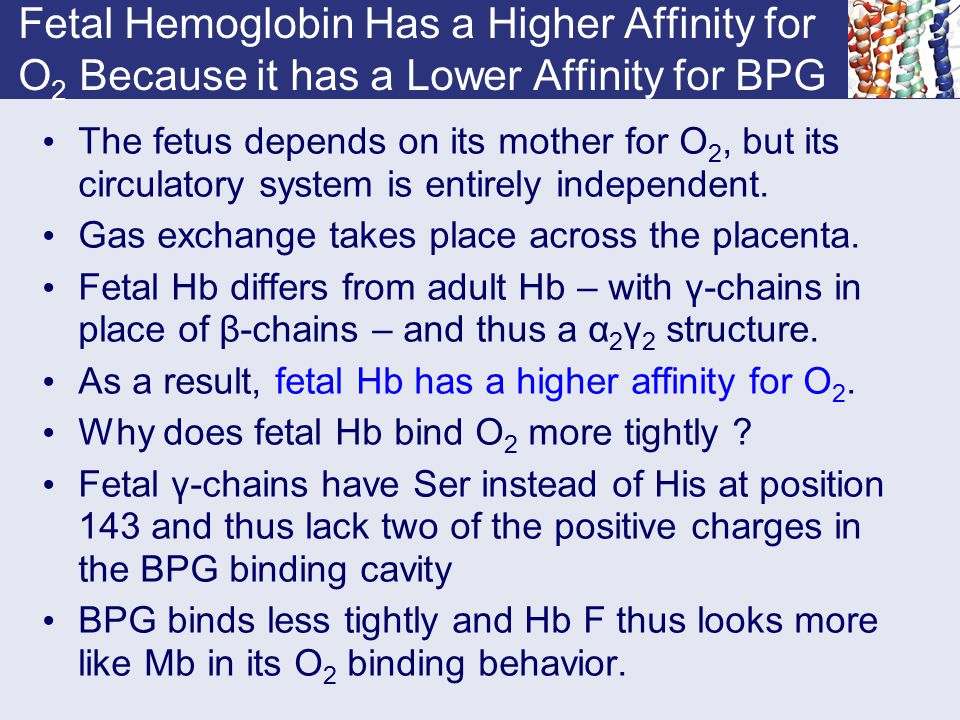 Fetal Hemoglobin Has a Higher Affinity for O2 Because it has a Lower Affinity for BPG