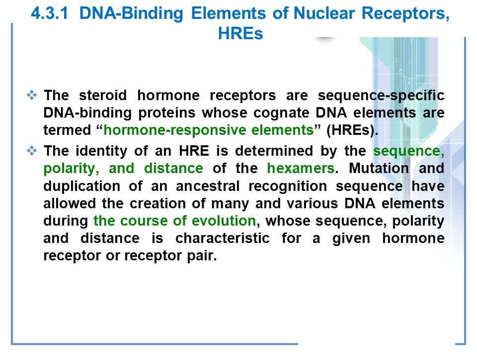 4.3.1 DNA-Binding Elements of Nuclear Receptors, HREs
