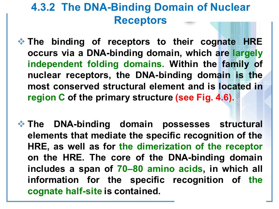 4.3.2 The DNA-Binding Domain of Nuclear Receptors
