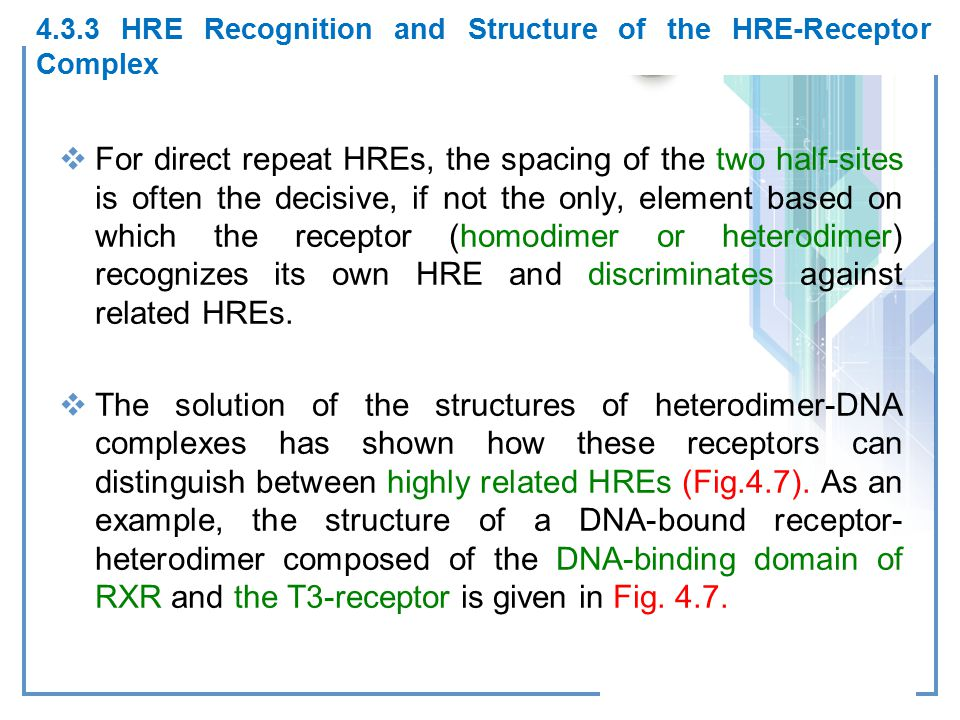 4.3.3 HRE Recognition and Structure of the HRE-Receptor Complex