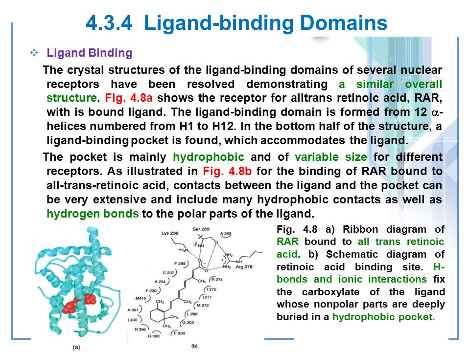 4.3.4 Ligand-binding Domains