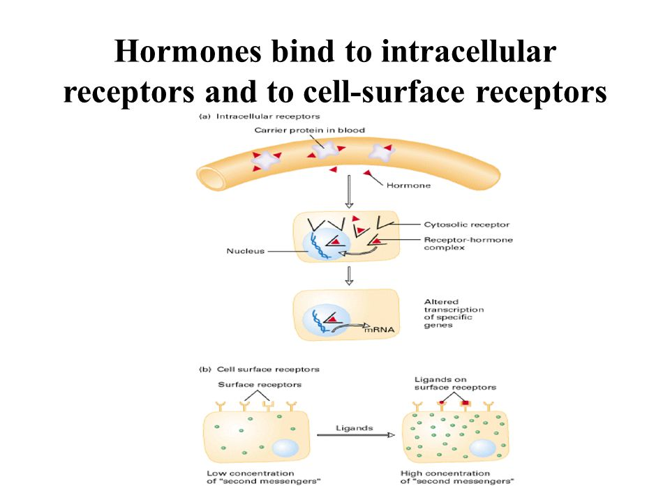 Hormones bind to intracellular receptors and to cell-surface receptors