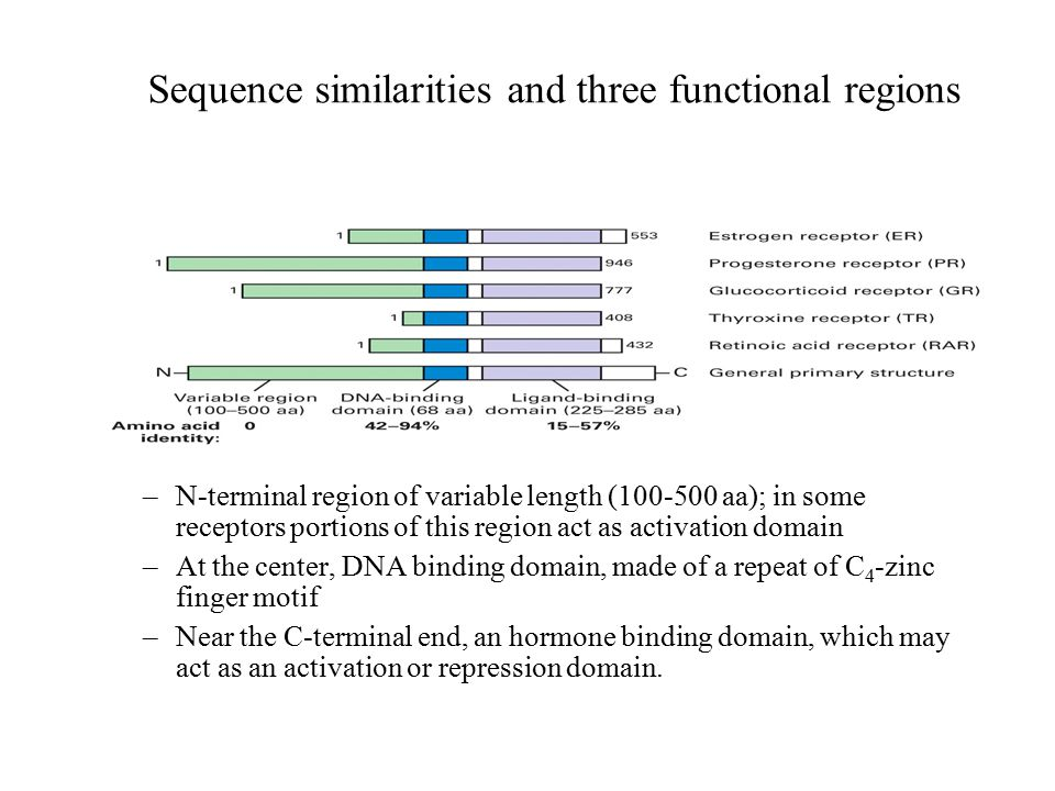 Sequence similarities and three functional regions