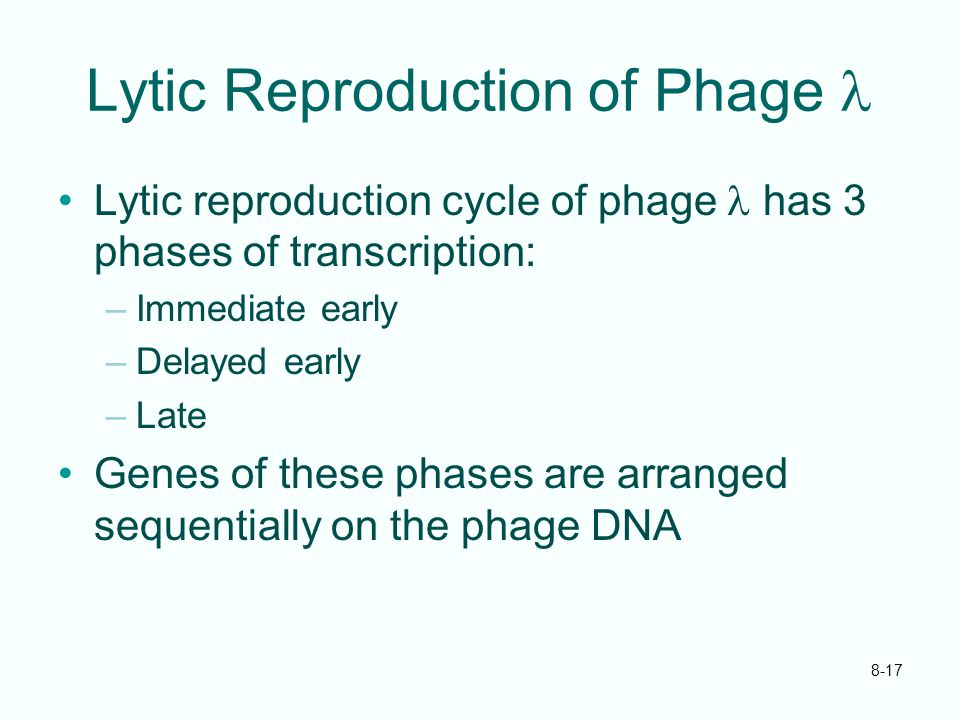 Lytic Reproduction of Phage l