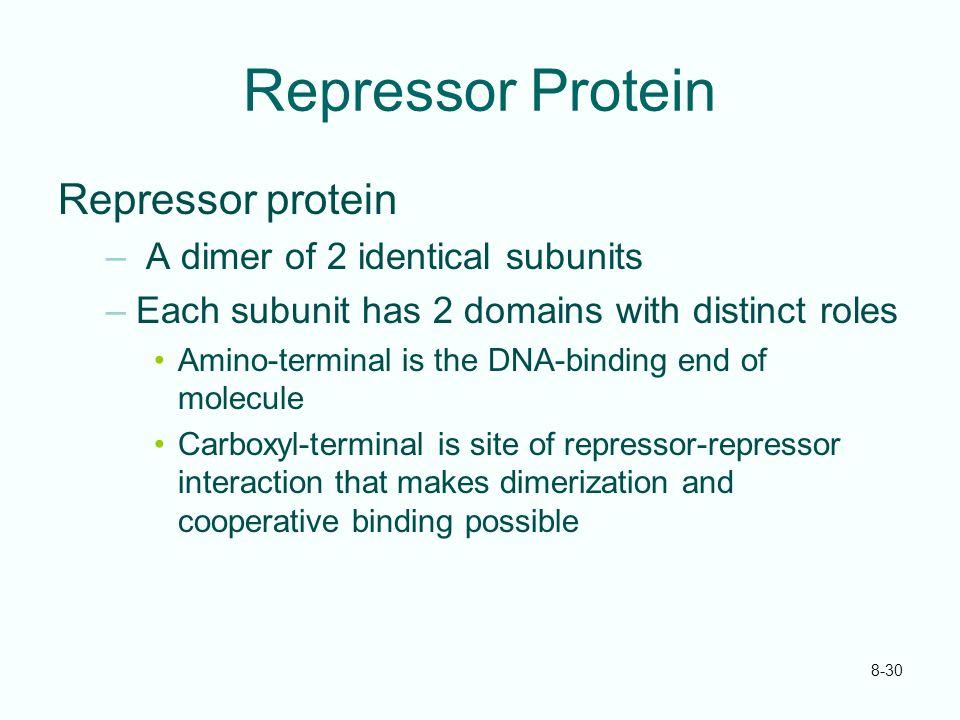 Repressor Protein Repressor protein A dimer of 2 identical subunits
