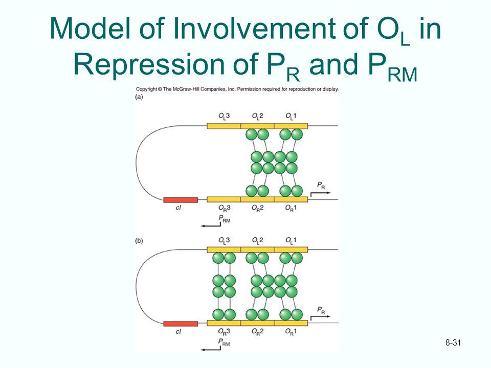 Model of Involvement of OL in Repression of PR and PRM