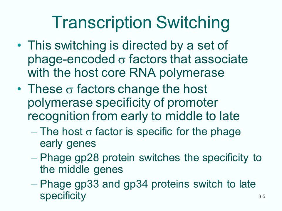 Transcription Switching