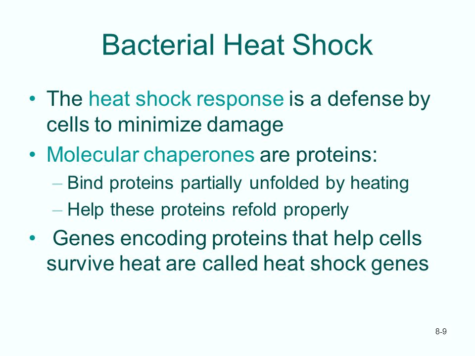 Bacterial Heat Shock The heat shock response is a defense by cells to minimize damage. Molecular chaperones are proteins: