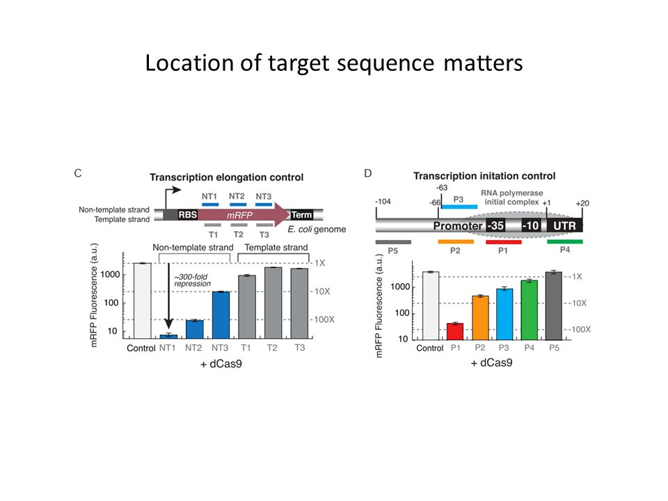 Location of target sequence matters