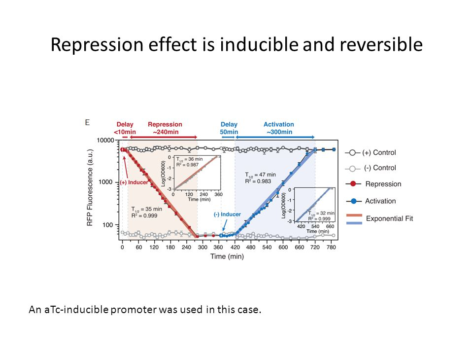 Repression effect is inducible and reversible