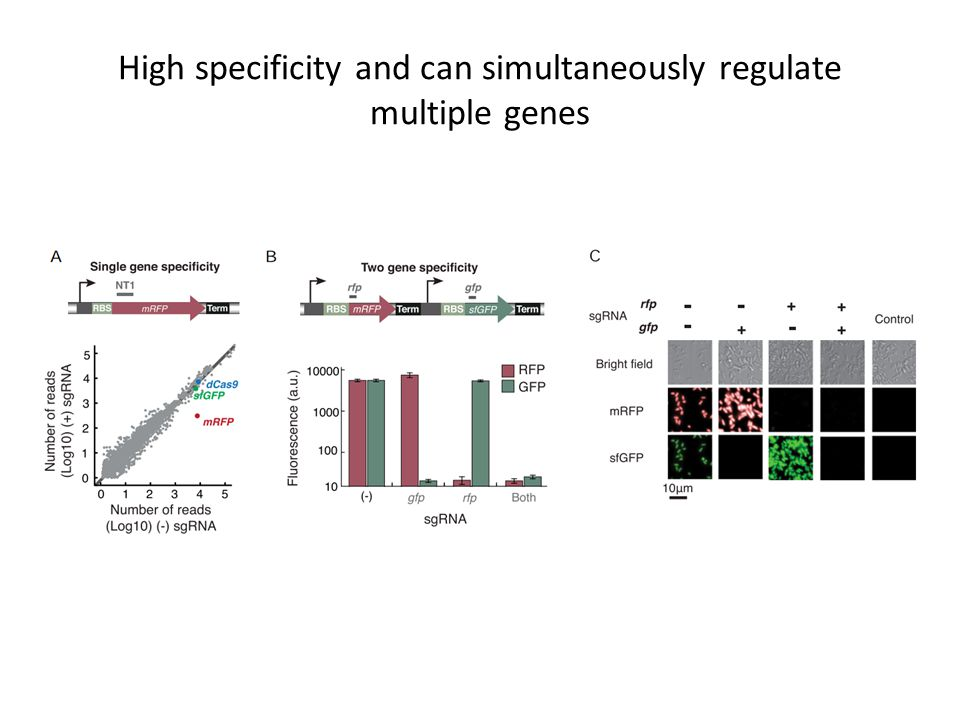 High specificity and can simultaneously regulate multiple genes