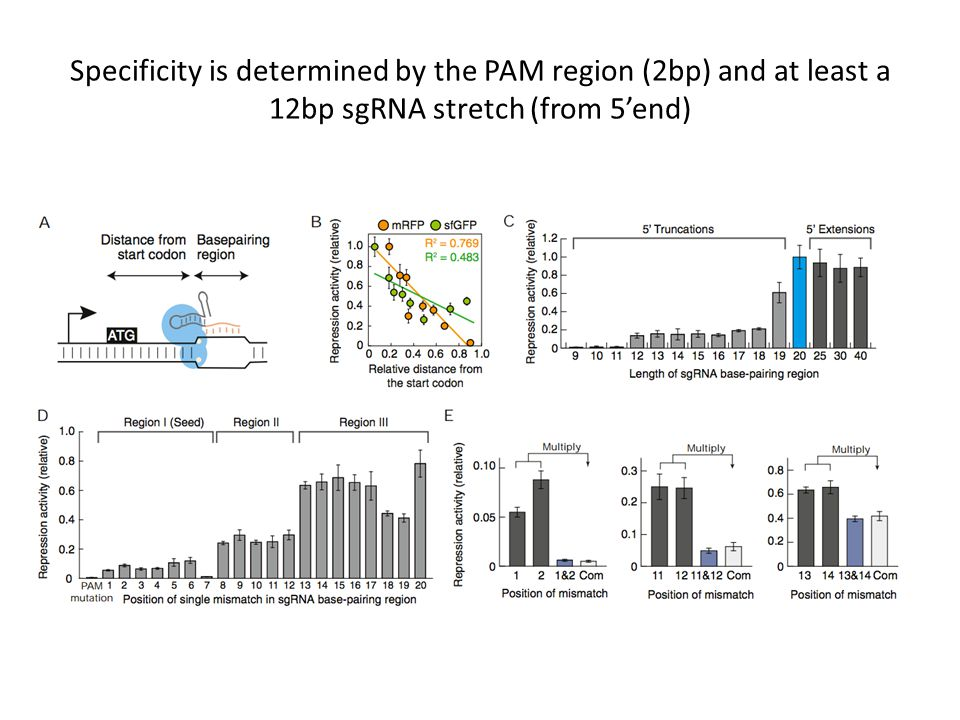 Specificity is determined by the PAM region (2bp) and at least a 12bp sgRNA stretch (from 5'end)