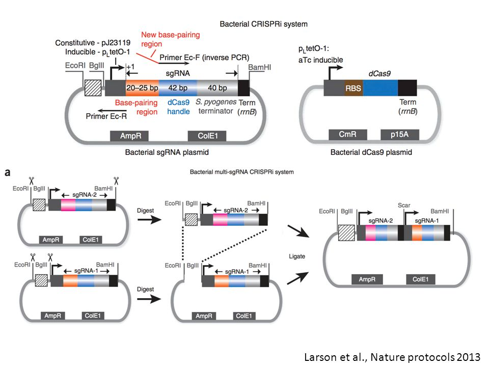 Larson et al., Nature protocols 2013