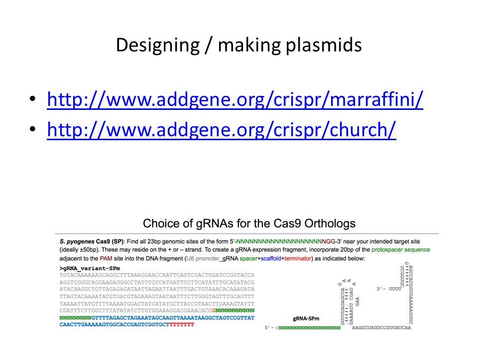 Designing / making plasmids