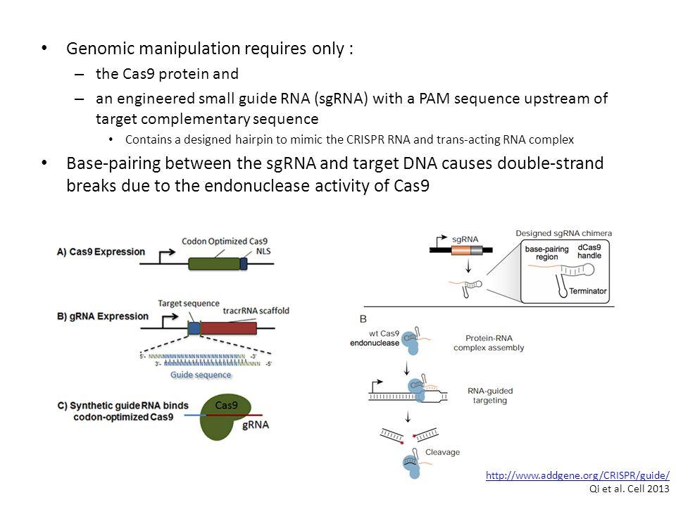 Genomic manipulation requires only :