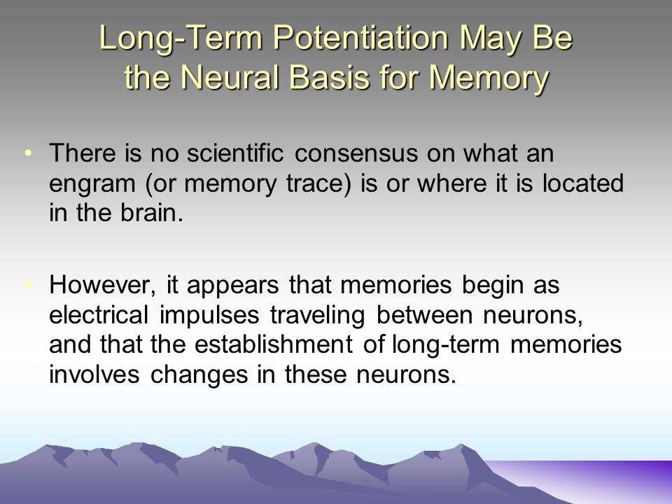 Long-Term Potentiation May Be the Neural Basis for Memory