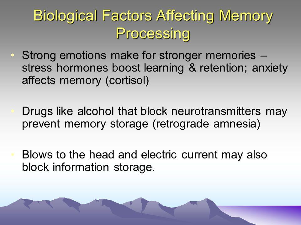 Biological Factors Affecting Memory Processing