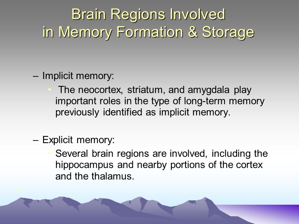 Brain Regions Involved in Memory Formation & Storage