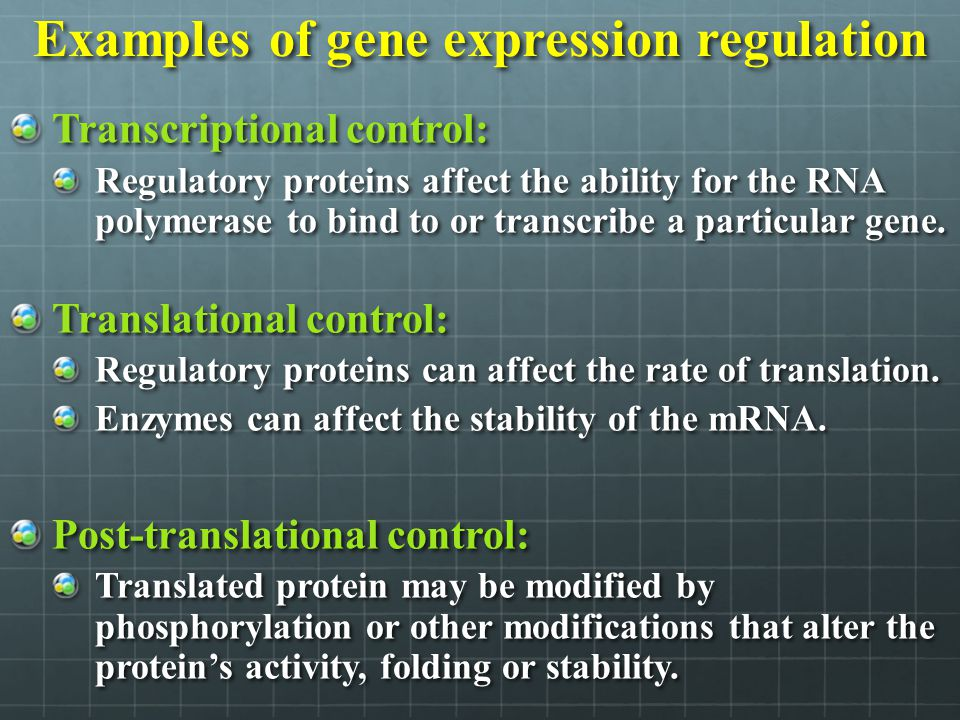 Examples of gene expression regulation
