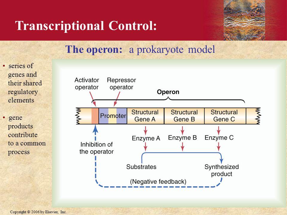 Transcriptional Control: