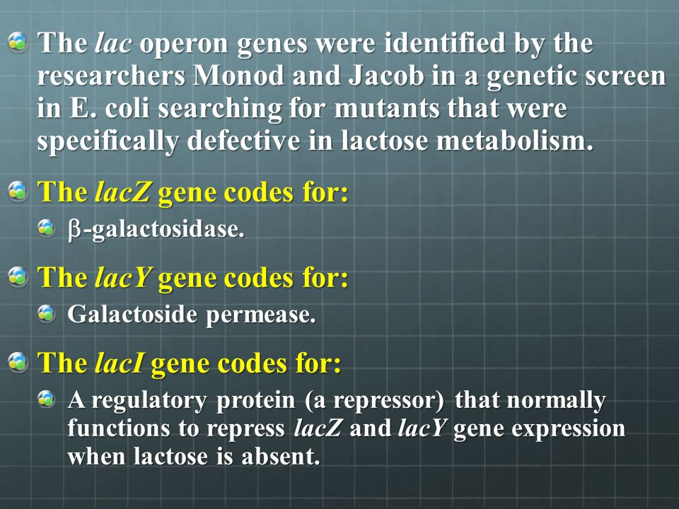 The lacZ gene codes for: The lacY gene codes for: