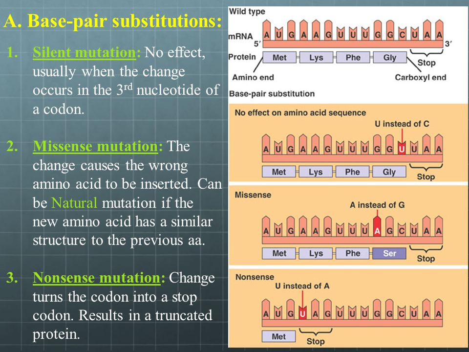 A. Base-pair substitutions: