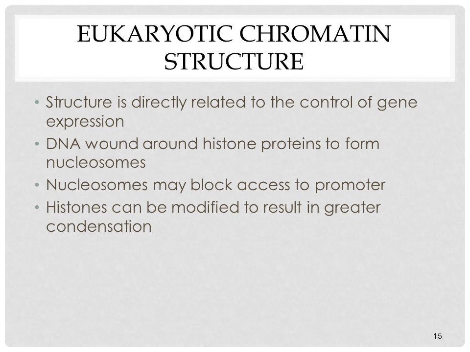 Eukaryotic chromatin structure