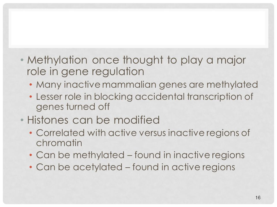 Methylation once thought to play a major role in gene regulation