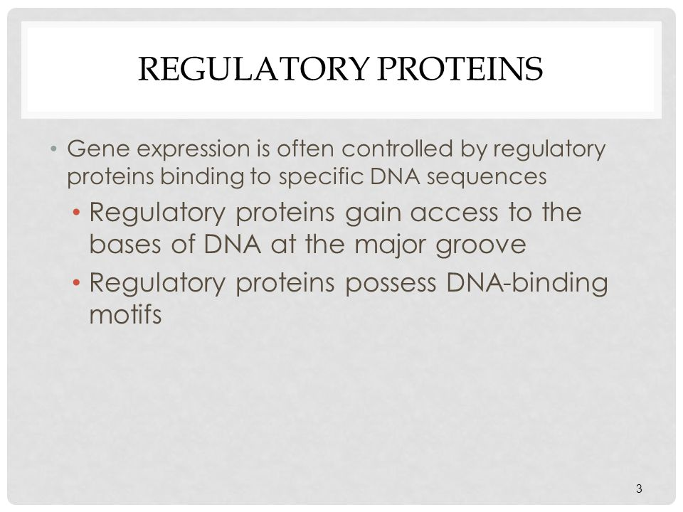 Regulatory Proteins Gene expression is often controlled by regulatory proteins binding to specific DNA sequences.