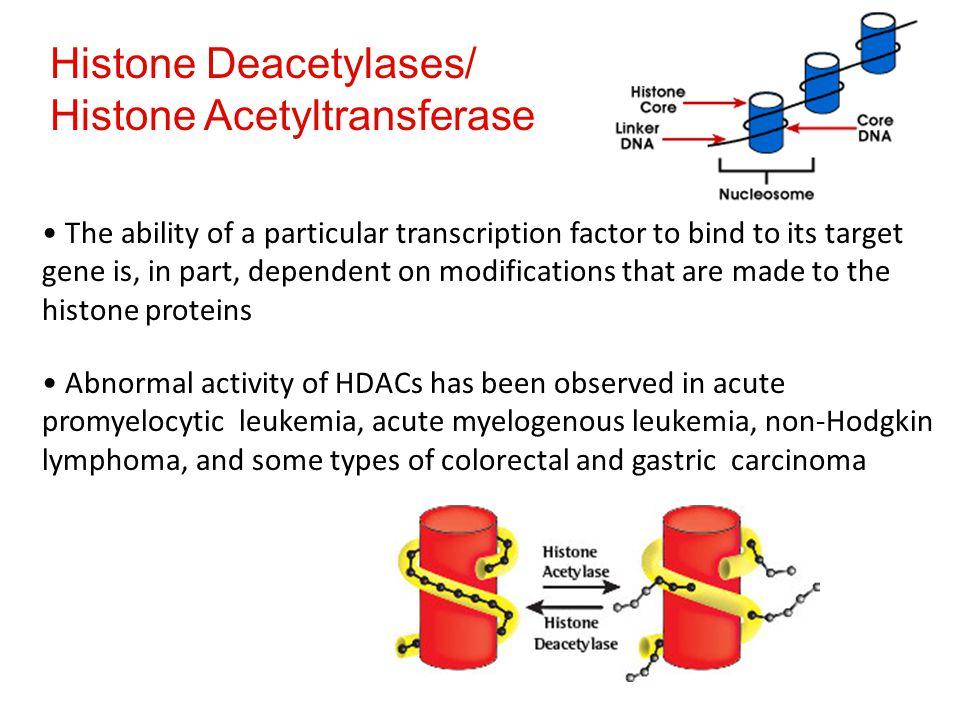 Histone Deacetylases/ Histone Acetyltransferase