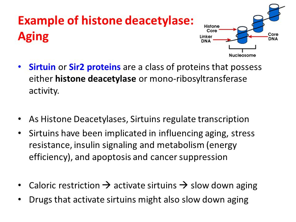 Example of histone deacetylase: Aging