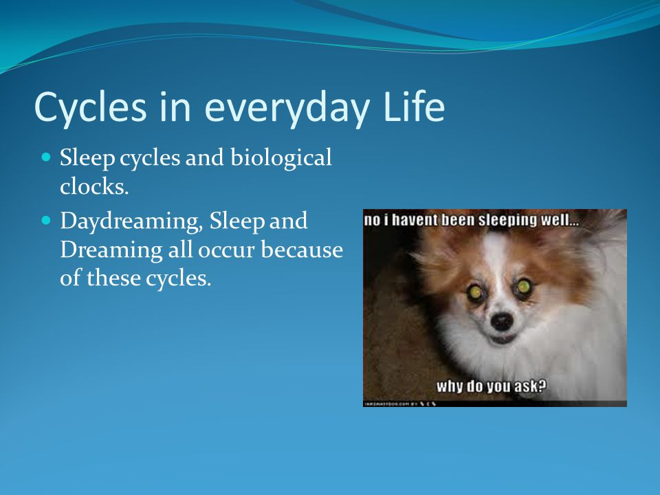 Cycles in everyday Life
