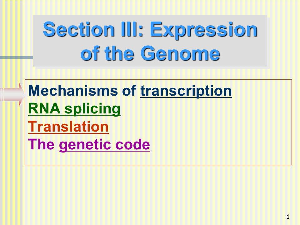 Section III: Expression of the Genome