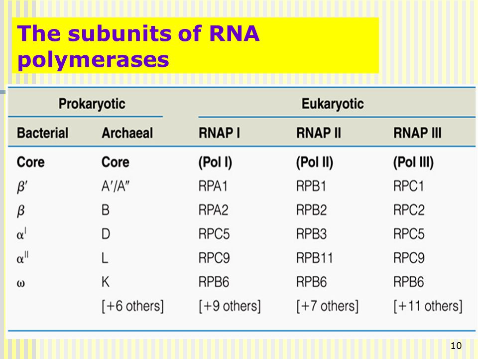 The subunits of RNA polymerases