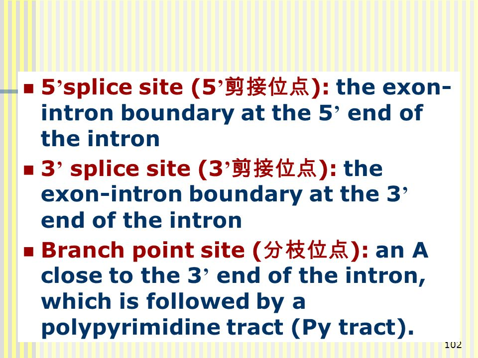 5'splice site (5'剪接位点): the exon-intron boundary at the 5' end of the intron