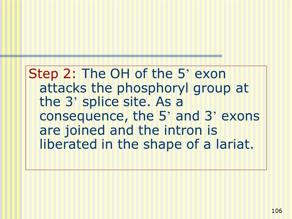 Step 2: The OH of the 5' exon attacks the phosphoryl group at the 3' splice site.