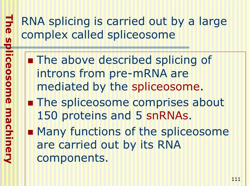 RNA splicing is carried out by a large complex called spliceosome